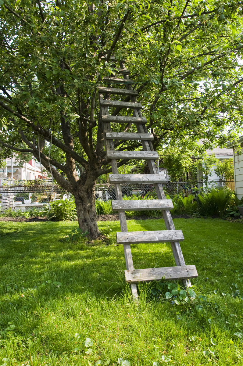 Tree with a ladder to ...